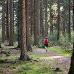 Orientering  –  en  sport  for  både  små  og  store