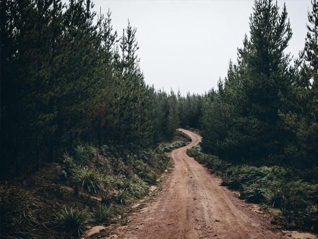 Gjørmete vei i skogen
